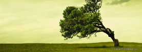 Leaning Tree Landscape, Free Facebook Timeline Profile Cover, Nature