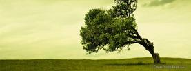 Leaning Tree Landscape, Free Facebook Timeline Profile Cover, Nature