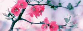 Pink Blossom Flowers Spring, Free Facebook Timeline Profile Cover, Nature