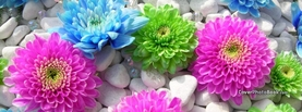 Pink Green Blue Flowers Stones Rocks, Free Facebook Timeline Profile Cover, Nature
