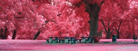 Pink Tree Leaves Park, Free Facebook Timeline Profile Cover, Nature