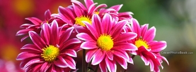 Pink Yellow Flowers White Edge, Free Facebook Timeline Profile Cover, Nature