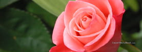 Pink and Rose Focus, Free Facebook Timeline Profile Cover, Nature