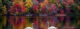 Rainbow Colorful Trees Swan Lake, Free Facebook Timeline Profile Cover, Nature