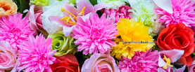 Rainbow Flowers Variety Colorful, Free Facebook Timeline Profile Cover, Nature