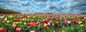 Rainbow Roses Flowers Field Clouds, Free Facebook Timeline Profile Cover, Nature