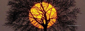 Rare Sunrise Behind Branches, Free Facebook Timeline Profile Cover, Nature