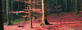 Red Leaves Forrest, Free Facebook Timeline Profile Cover, Nature