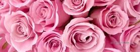 Several Pink Roses, Free Facebook Timeline Profile Cover, Nature