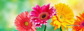 Spring Flowers Light Bokeh, Free Facebook Timeline Profile Cover, Nature