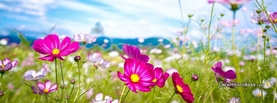 Spring Pink Flowers Blue Sky Grass, Free Facebook Timeline Profile Cover, Nature