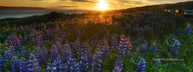 Sunset Purple Flowers Scenery, Free Facebook Timeline Profile Cover, Nature