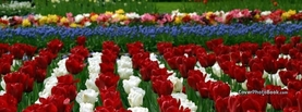 Tulip Flower Garden Red White, Free Facebook Timeline Profile Cover, Nature