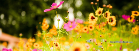 Vivid Flower Meadow Spring, Free Facebook Timeline Profile Cover, Nature