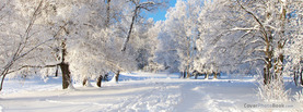 Winter Ice Trees, Free Facebook Timeline Profile Cover, Nature