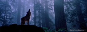Wolf Dark Forest, Free Facebook Timeline Profile Cover, Nature