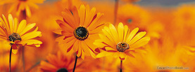 Yellow Garden Flowers, Free Facebook Timeline Profile Cover, Nature