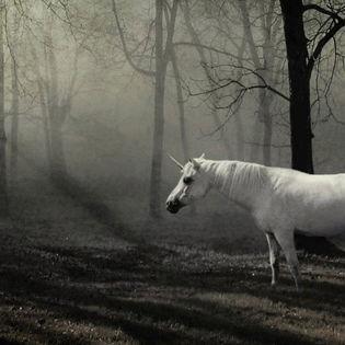 The Last Unicorn Facebook Cover Animals