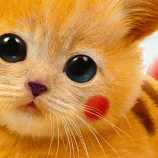 Real Pikachu Pokemon Cat Facebook Cover Characters