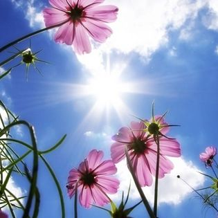 Purple Flowers in Sky Spring Facebook Cover - Nature