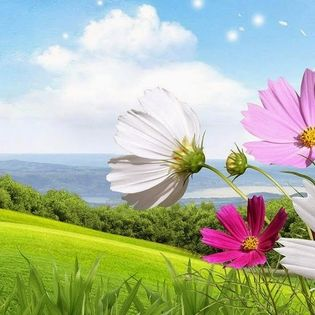 Spring Landscape Flowers Wind Facebook Cover Nature